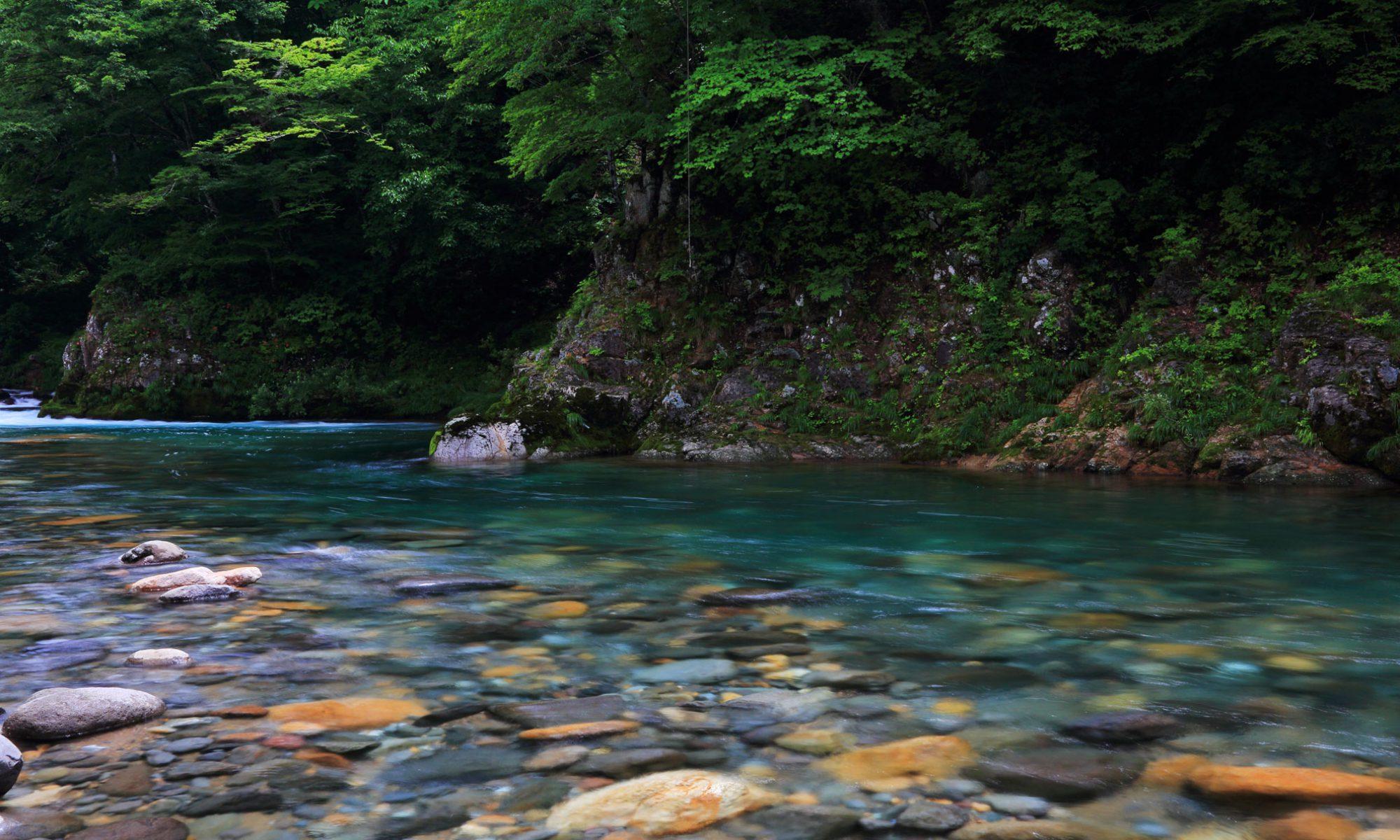 奥越漁業協同組合 -福井県 大野市-